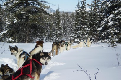 Wilderness Cabin-Based Dogsledding
