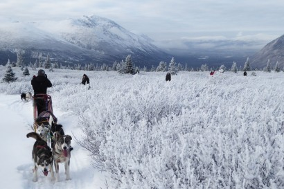 Half-Day Dogsledding Tour