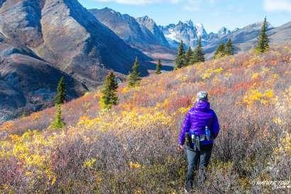 Nature Tours of Yukon