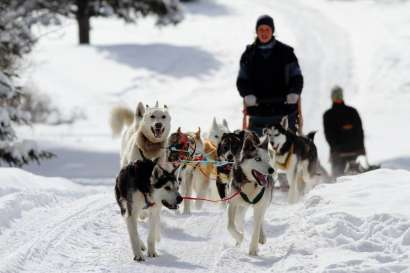 3-Day Touch of Winter Dog Sledding Adventure