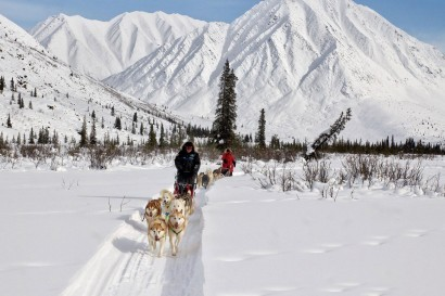 A Taste of Mushing